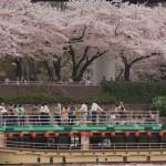 隅田川花見 展望デッキから満開の桜を愛でる02