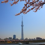Festival 02 of Sumida River cherry blossom viewing cherry tree and the Skytree
