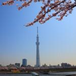 隅田川花見 桜とスカイツリーの饗宴02
