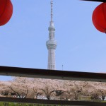 Festival 03 of Sumida River cherry blossom viewing cherry tree and the Skytree